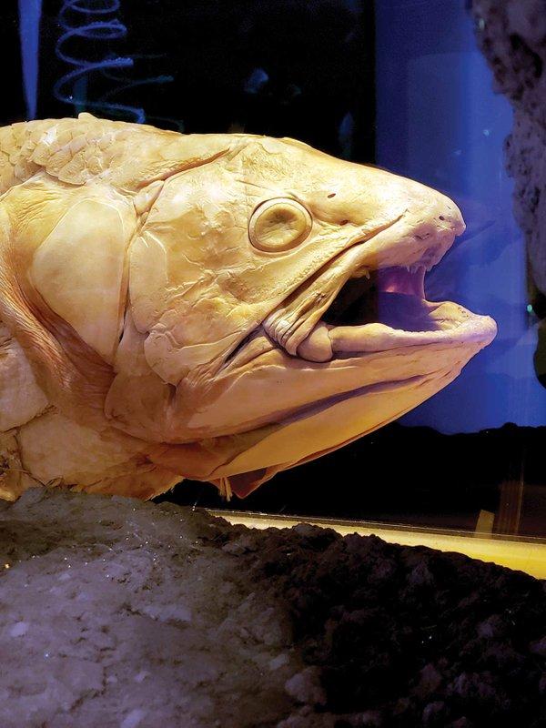 008-Coelacanth.jpg