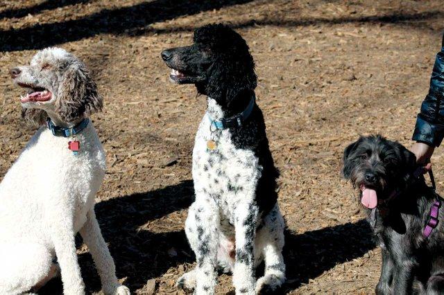 Waller-Mill-College-Landing-Dogs_cmyk_l.jpg
