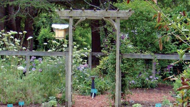 Mattey's Garden