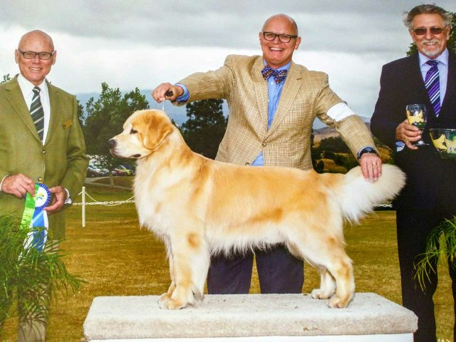 IMG_20170412_180857-Michael-Faulkner-showing-Wilson-to-a-big-win-at-the-Golden-Retriever-Club-of-Greater-Los-Angeles-Specialty.jpg