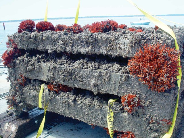 Encrusted-Biogenic-Reef-after-five--years-in-the-water-view--2.jpg